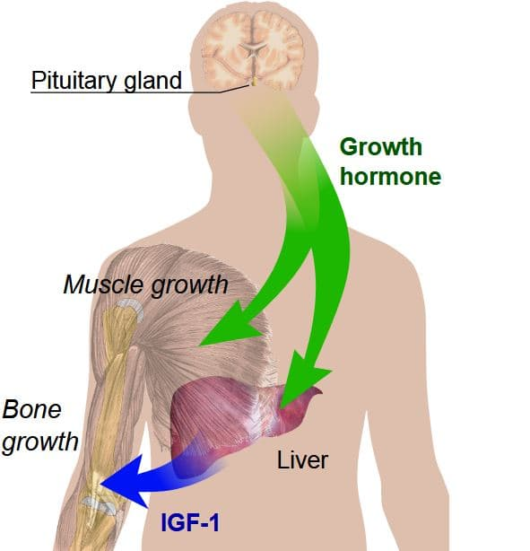 Hgh Benefits What To Expect From Using Human Growth Hormone