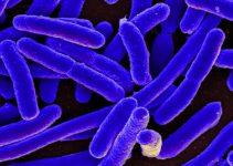 E. Coli Bacterial Resistance