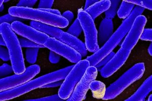 E. Coli Bacterial Resistance