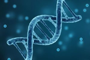 The Connection Between Heredity And Longevity