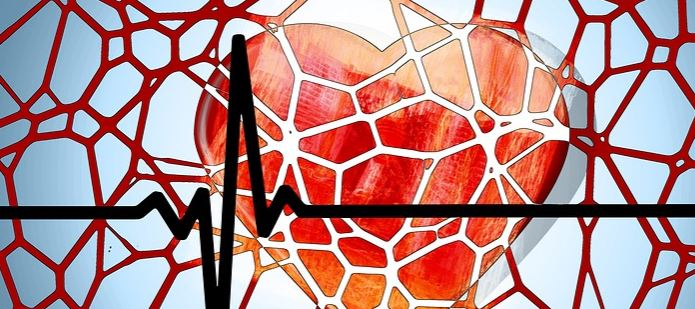 How Do Bone Marrow Cells Receive Signals From The Heart After a Severe Heart Attack?